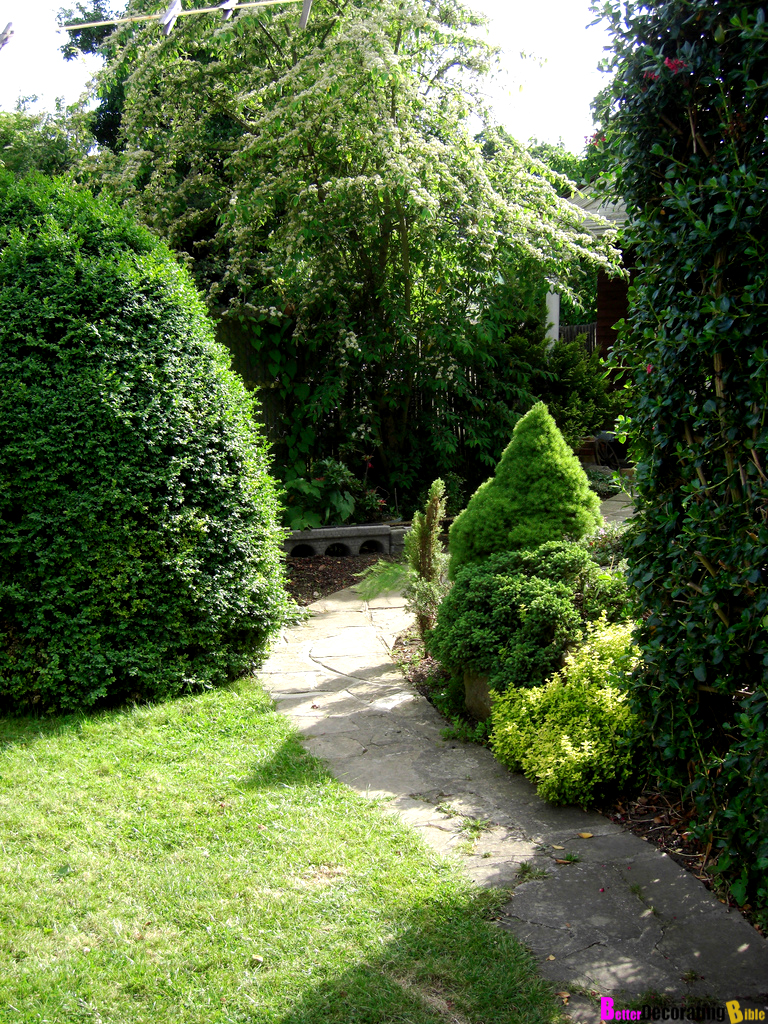 Backyard garden ideas plants photograph bringing privacy t for Garden design ideas with hedges