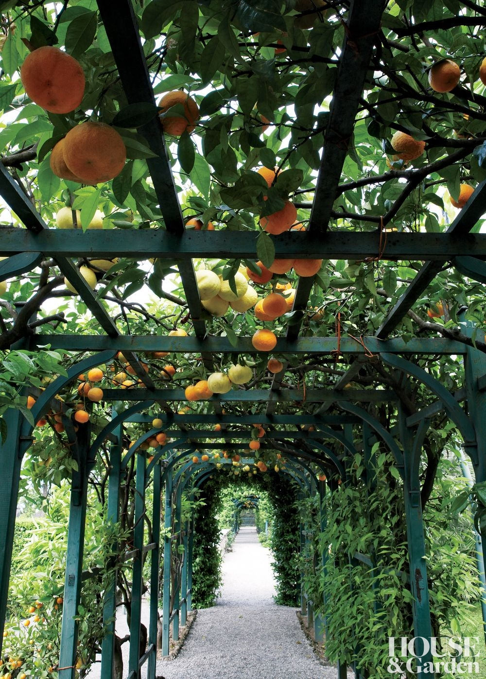 orange tunnel garden ideas hanging california