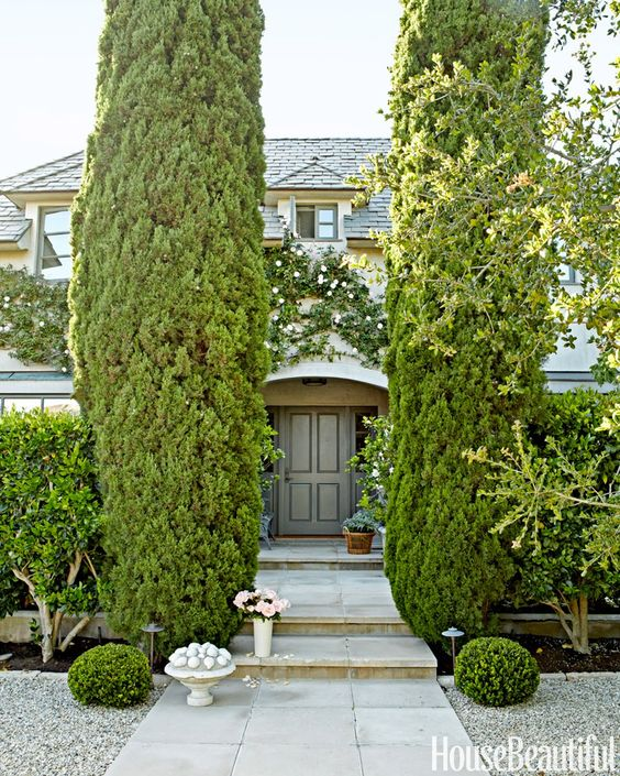 garden hedge cypress landscaping