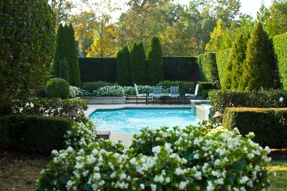 pool hedge lanscaping ideas italian cypress