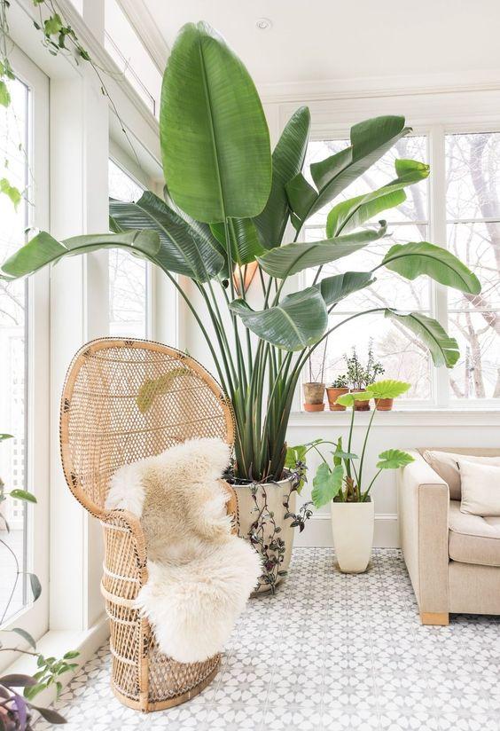 banana-plant-tree-decorating-ideas-greenery