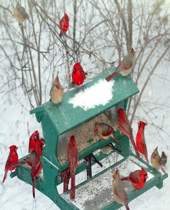 robin-winter-birdfeeder