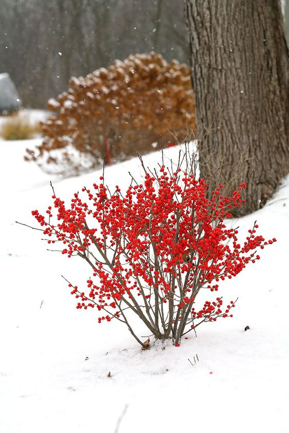 winter-gardening-adding-colors-to-garden