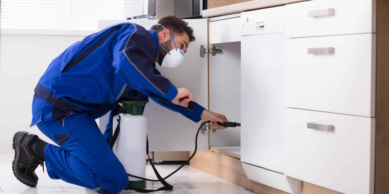 Selecting the Most Efficient Pest Control Service -  BetterDecoratingBibleBetterDecoratingBible